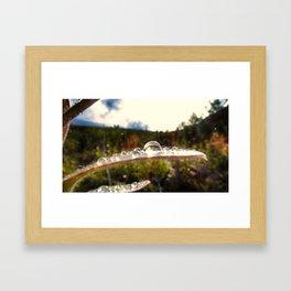 Sunlight Catching Raindrops Framed Art Print