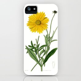 Spear-Leaved Coreopsis / Curtis 1857 iPhone Case