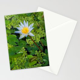 Beautiful Nymphaea Nouchali Lily Pad Flower is Blooming Stationery Cards