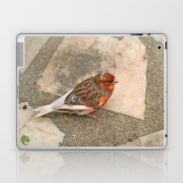 Lovely runaway canary bird Laptop & iPad Skin
