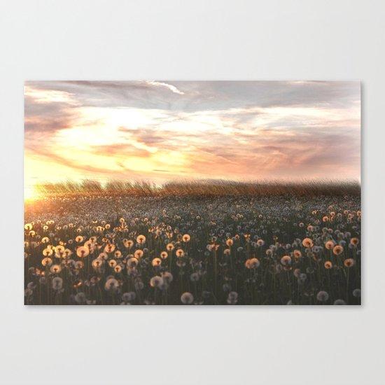 DandY Canvas Print