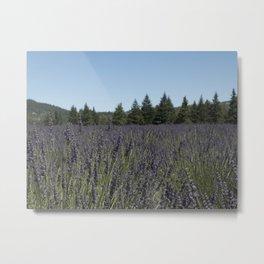 Lavender Field in the Woods Metal Print