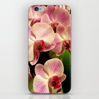orchid iPhone & iPod Skins featuring orchid by Bitifoto