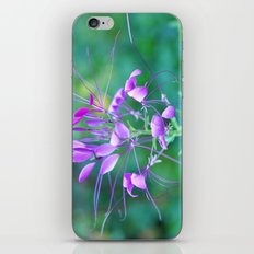 Cleome iPhone & iPod Skin