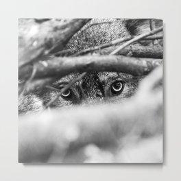 Wild Eyes Wolf Edition Metal Print