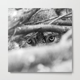 Wild Eyes Wolf Edition Metal Print