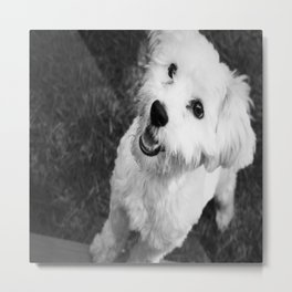 A Puppy Saying Hello Black and White Metal Print
