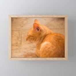 Orange Cat Is Resting On The Terrace  #decor #society6 #homedecor Framed Mini Art Print