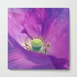 purple poppy macro IIX Metal Print