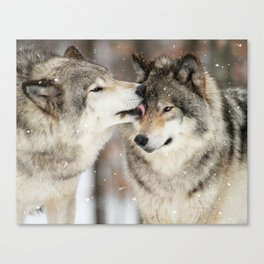 Wolf Kisses Canvas Print