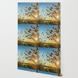 Cotton grass from the high moorland Wallpaper