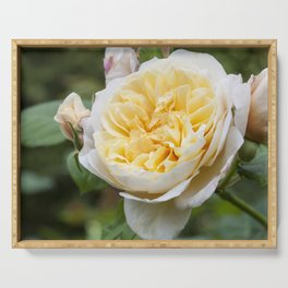 Old English rose Serving Tray