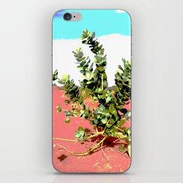 Torha flower desert sahara iPhone Skin