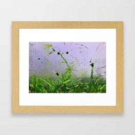Green crystals pt.4 Framed Art Print