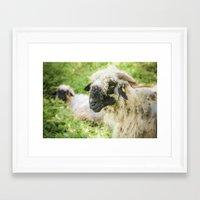 ram Framed Art Prints featuring ram by hannes cmarits (hannes61)