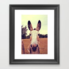 a curious donkey. Framed Art Print