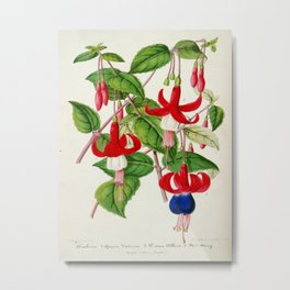 Fuchsia Queen Victoria Prince Albert Vintage Botanical Floral Flower Plant Scientific Illustration Metal Print