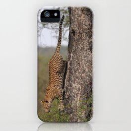 Cat by Owain McGuire iPhone Case