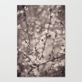 Spring Floral Branches in Sepia Canvas Print