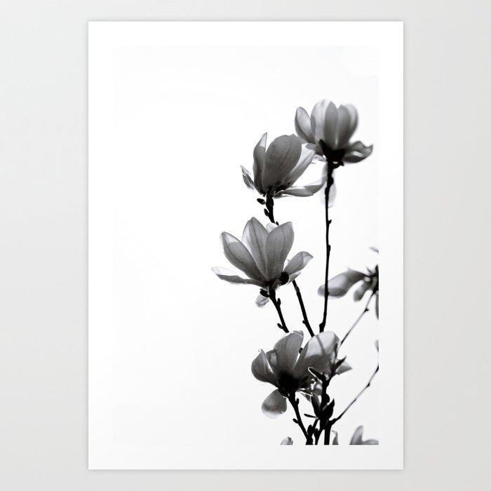 BLACK MAGNOLIA Art Print