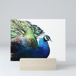 Romeo a free range peacock Mini Art Print
