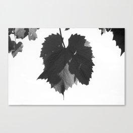 Untitled (Vine leaf you idiot) Canvas Print