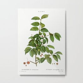 Spindle, Evnymus verrucosus from Traité des Arbres et Arbustes que l'on cultive en France en pleine Metal Print