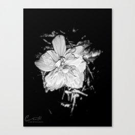 Tanto Amor IV Canvas Print