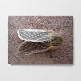 Moth in my garden1 Metal Print