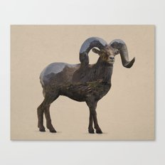 The Rocky Mountain Bighorn Sheep Canvas Print