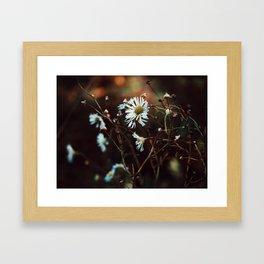 Daisies n Sunset Framed Art Print