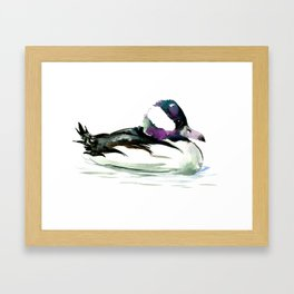 Bufflehead Duck Framed Art Print