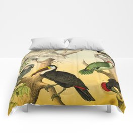 6 Birds Comforters