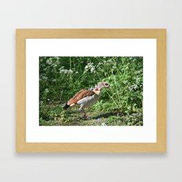 British Bird Framed Art Print