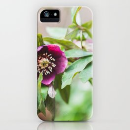 Hellebores in Bloom - Flower Photography iPhone Case