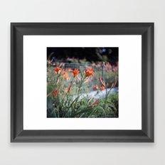 Day Lilies Framed Art Print