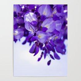 lilac wisteria Poster