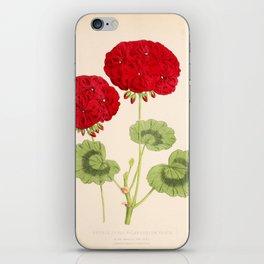 Double Zonal Pelargonium Vesta Vintage Flower iPhone Skin