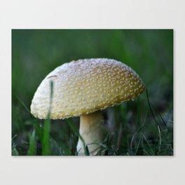 Freckles Canvas Print