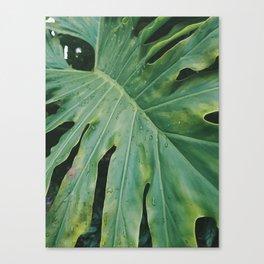 Plantae III Canvas Print