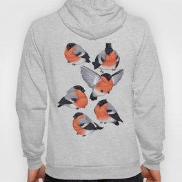 Eurasian Bullfinches Hoody