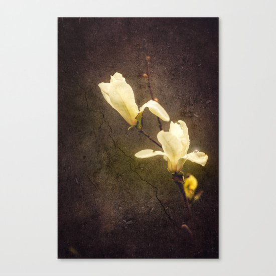 Dusty Canvas Print