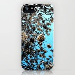 Hana Collection - Hanami Time iPhone Case