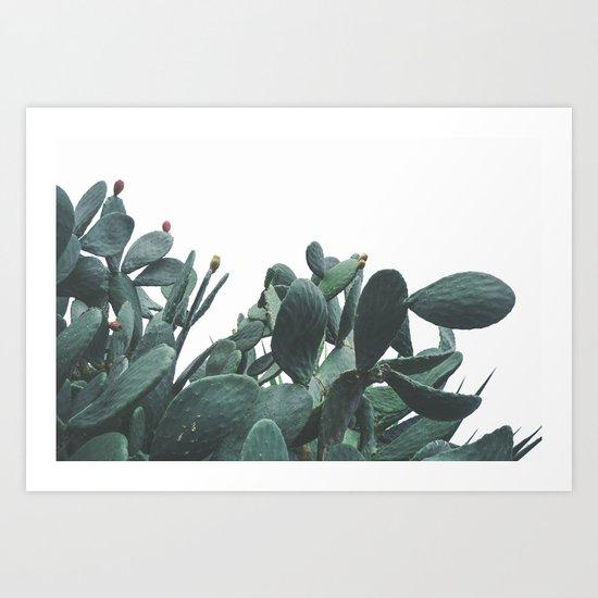 Fruit Cactus Desert by judithhoy