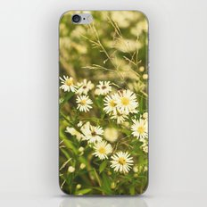 Daisies in Autumn iPhone & iPod Skin