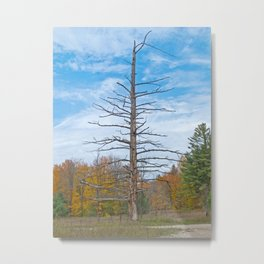 North Country Byway Metal Print