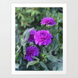 Purple flower in Butchart's Garden Art Print