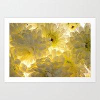 Lighted Chrysanthemums Art Print