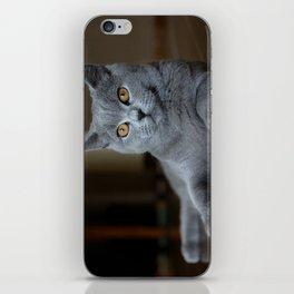Diesel the cat 1 iPhone Skin