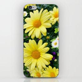 Pretty Daisies iPhone Skin